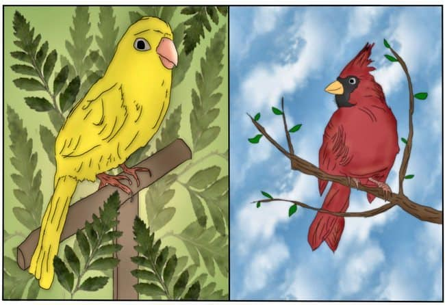 Where Do The Birds Go? e-Book One by Elga Haymon White, VicToria Freudiger and illustrated by Linda T. Phillips